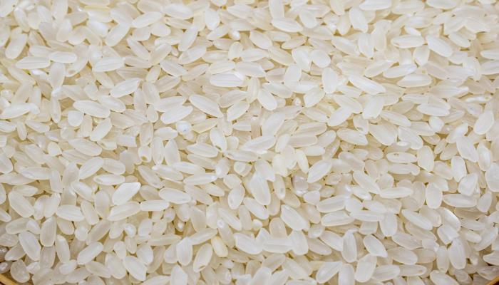 丝苗米是什么米 哪里产