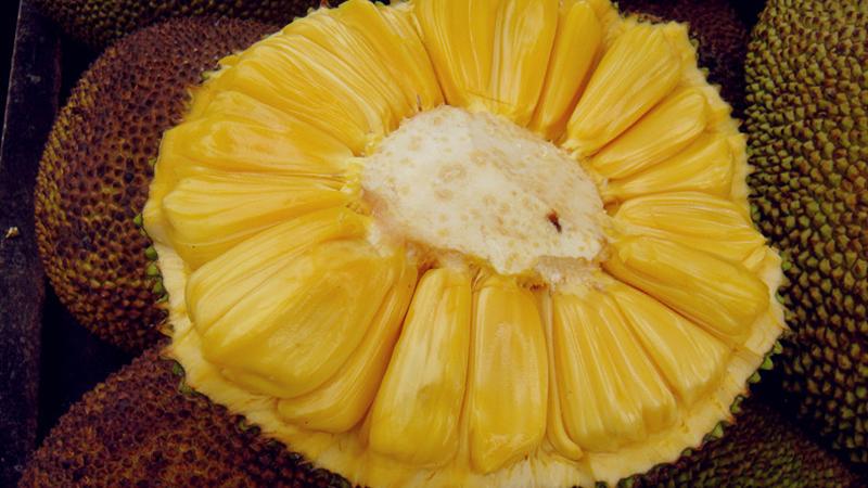 泰国菠萝蜜和海南菠萝蜜的区别